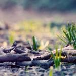 Grow Your Reader Base This Spring with Book Marketing Services
